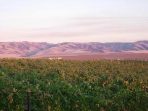 2006 Vineyard A Glow
